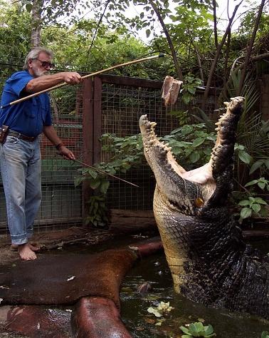 世界最大ワニの牙