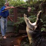マリンランドメラネシア(ワニ園)の世界最大のワニの餌付けショーが熱い