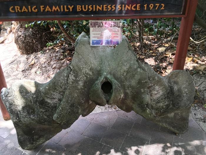 グリーン島のクジラの頭の骨の化石